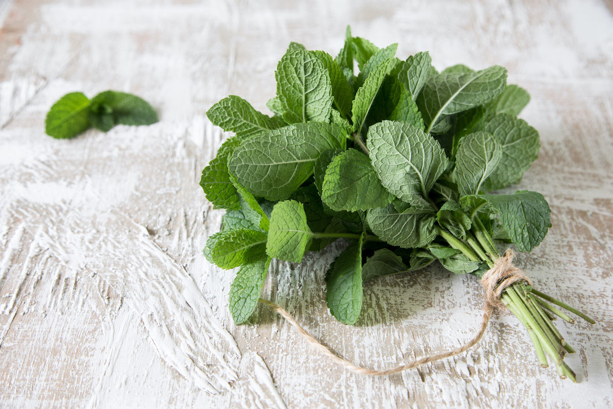 Growing Peppermint for Tea and Mojitos